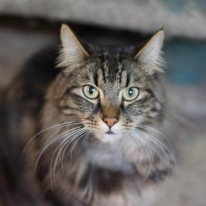 Cat for Adoption: Eddy